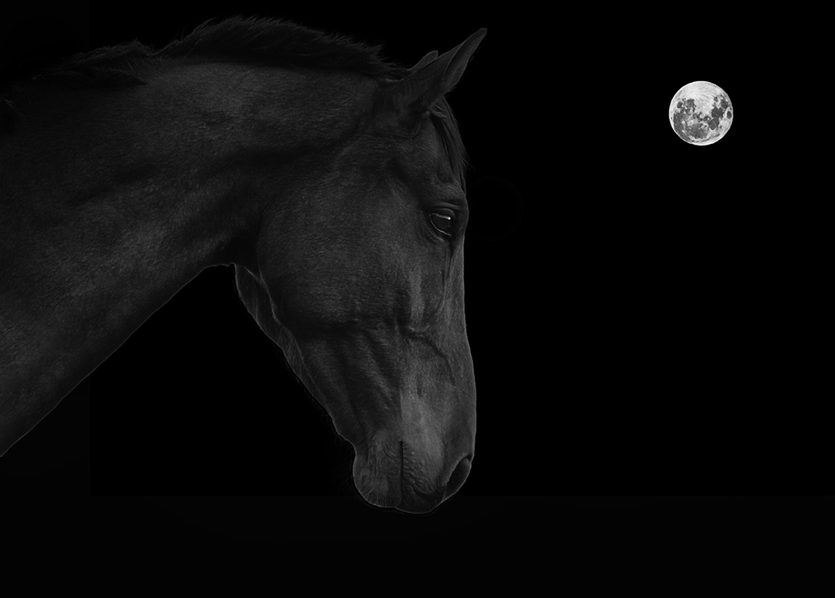 Image of horse with moon