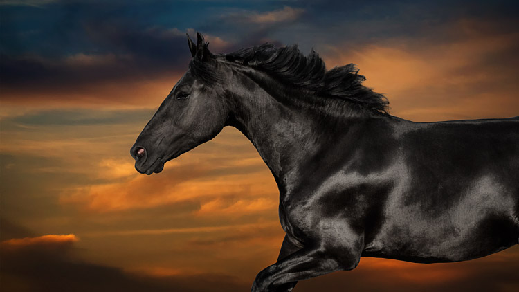 Horse running across a sunset-sky