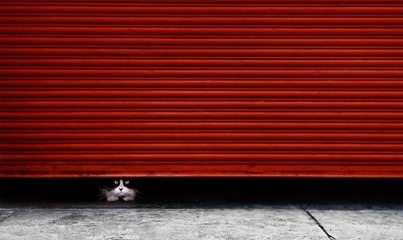 Peeping tom cat under red roller door