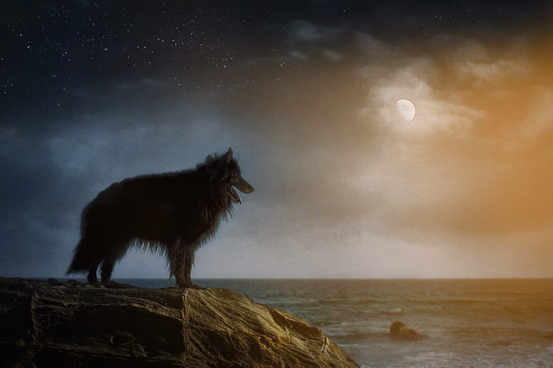 WolfCub at the beach with the moon