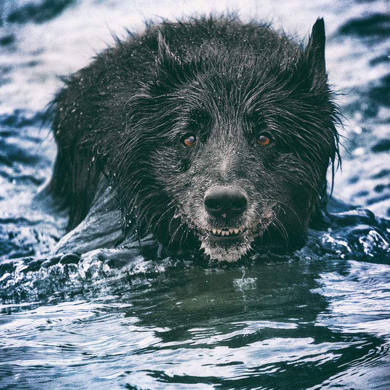 Face of dog in deep water at beach
