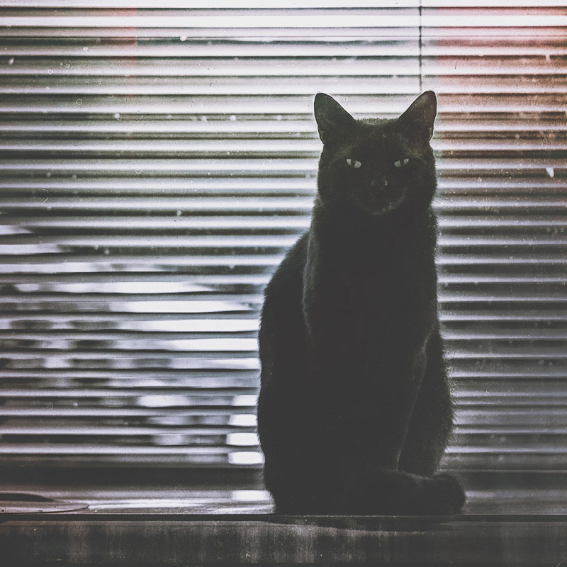 Black cat sitting in front of window