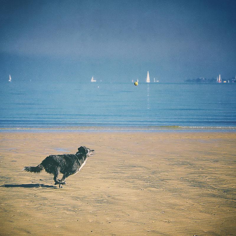Dog chasing a ball at the beach