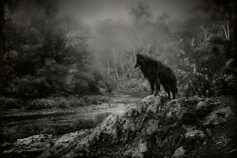 Belgian-Shepherd-overlooking-river