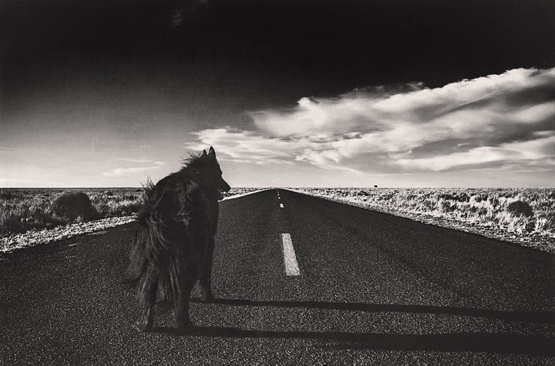 Dog-on-never-ending-road