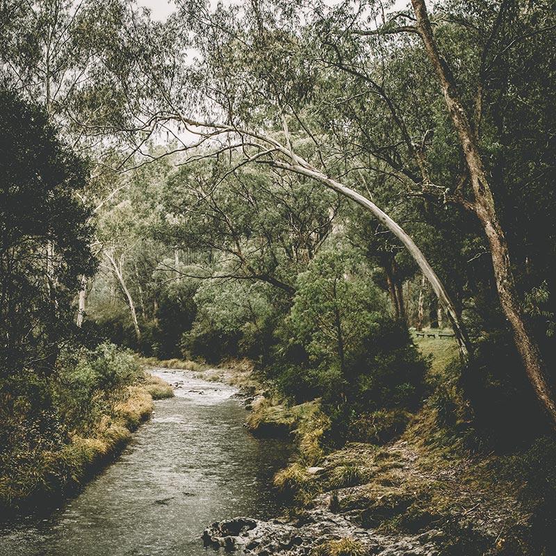 Australian-river -bush-scene