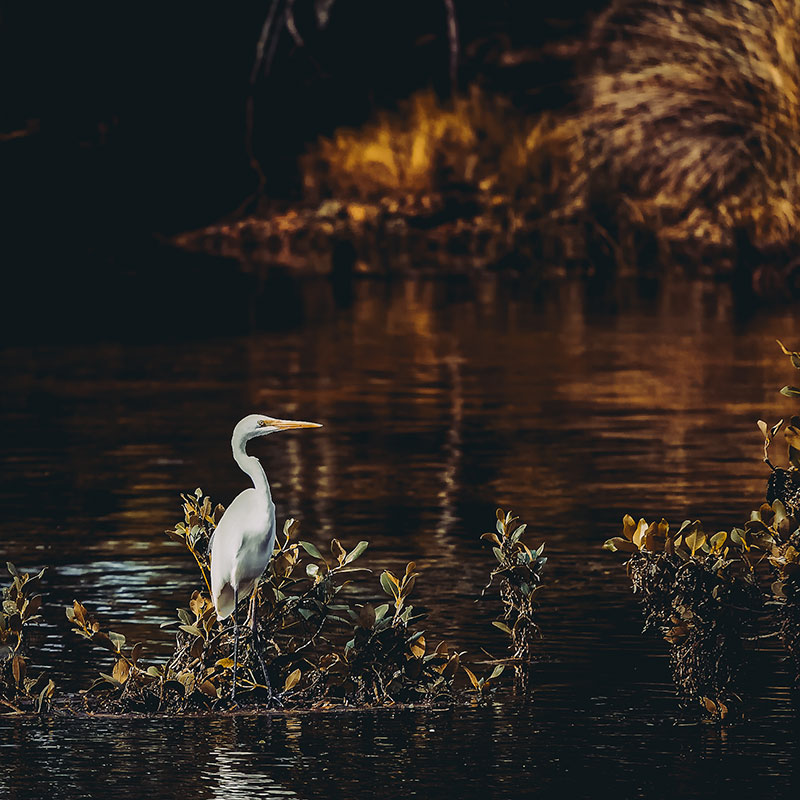 Crane-standing-in-water