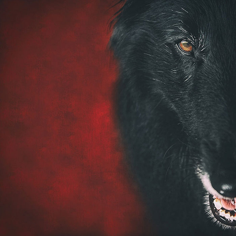 Mr-Wolf(Cub)