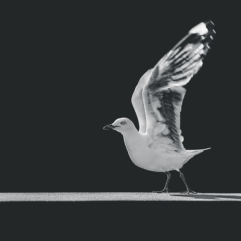 Seagull-taking-off