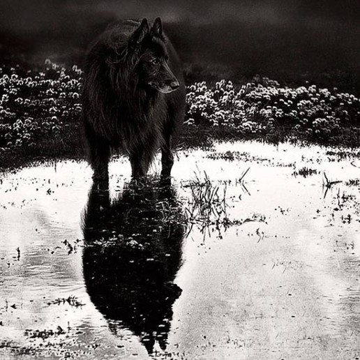 Dog-standing-in-pool-of-water-with-reflection-