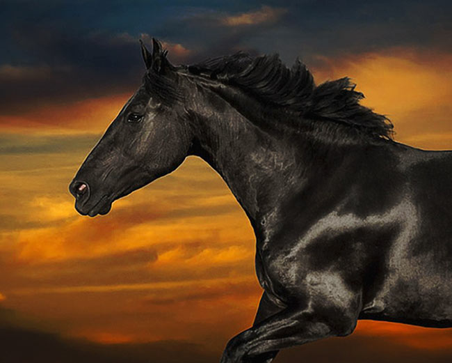Horse-at-galloping-across-a-sunset-sky-2-