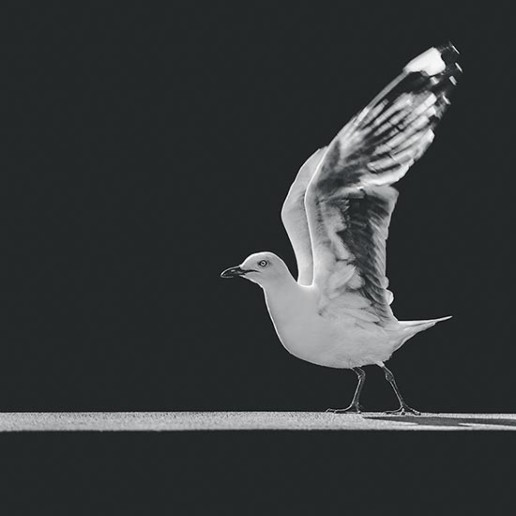 Seagull-taking-off-