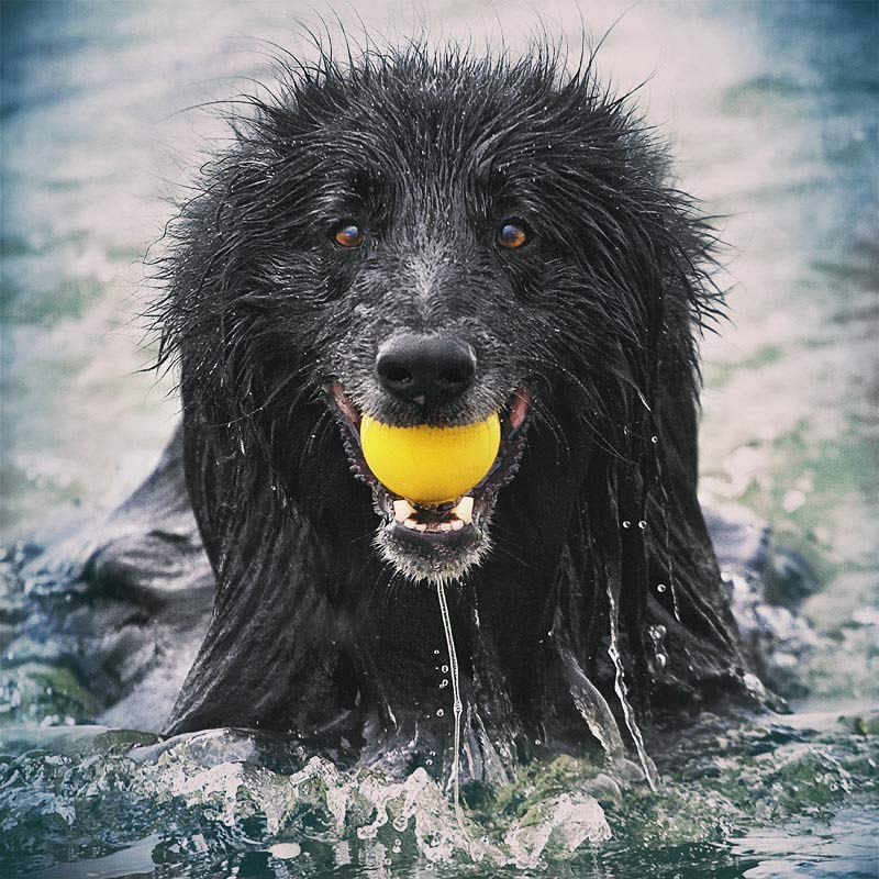 Smiling-Dog-in-water-with-ball