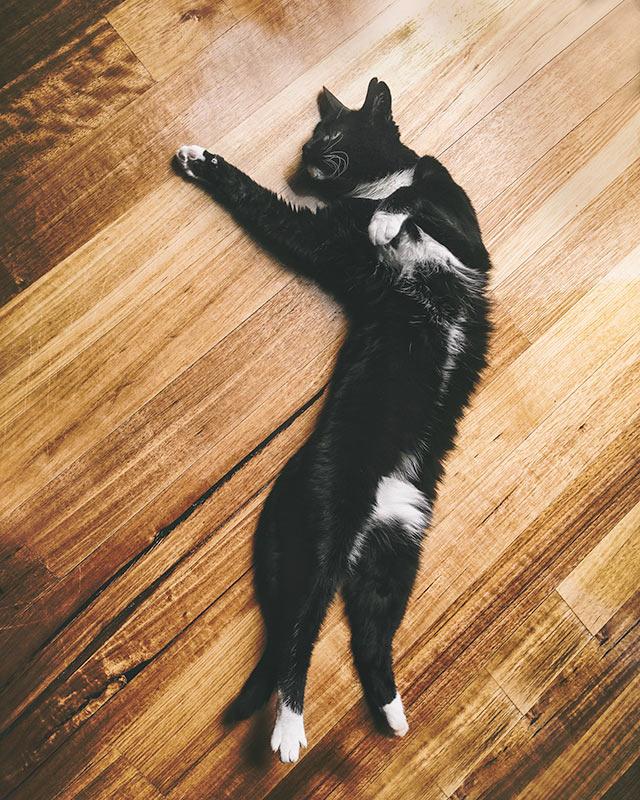 Stretching-Tuxedo-cat