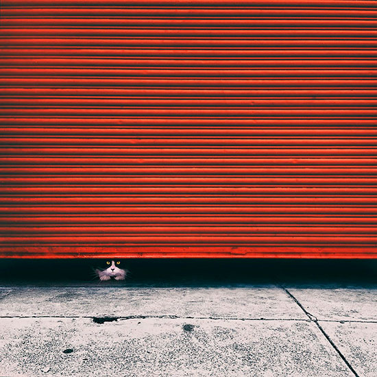 Tuxedo-cat-peeking-out-from-red-roller-door-