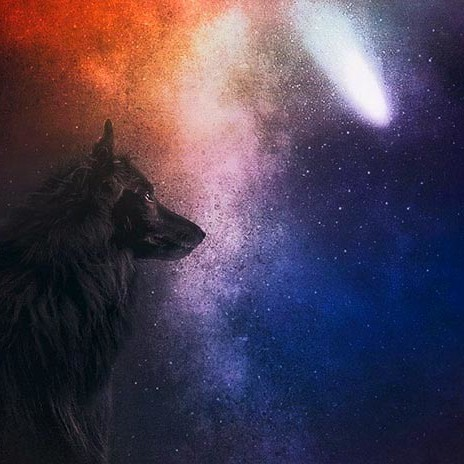 Belgian Shepherd WolfCub-and-the-stars-