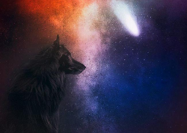 Belgian Shepherd WolfCub-and-the-stars-