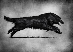 Black dog running.jpg