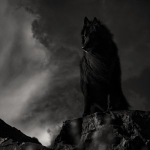 Gothic shot of WolfCub on rock with stormy skies.jpg