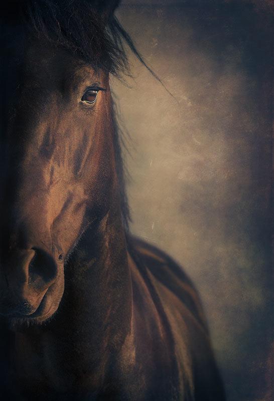 half-face-horse-portrait