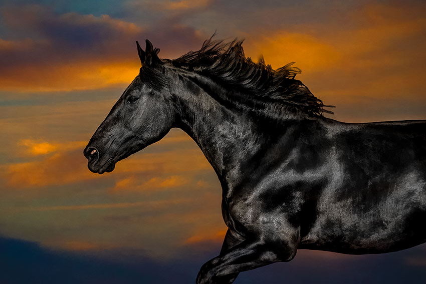 horse-galloping-across-a-sunset-sky