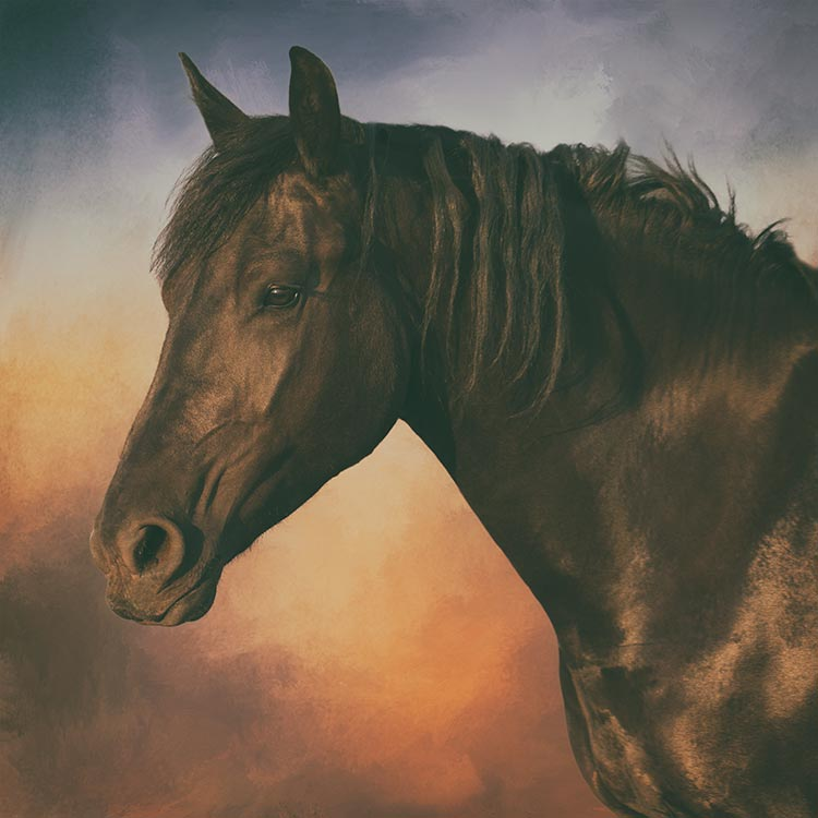 horse-head-portrait-with-a-textured-background