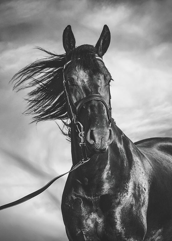 horse-with-mane-blowing-in-the-wind