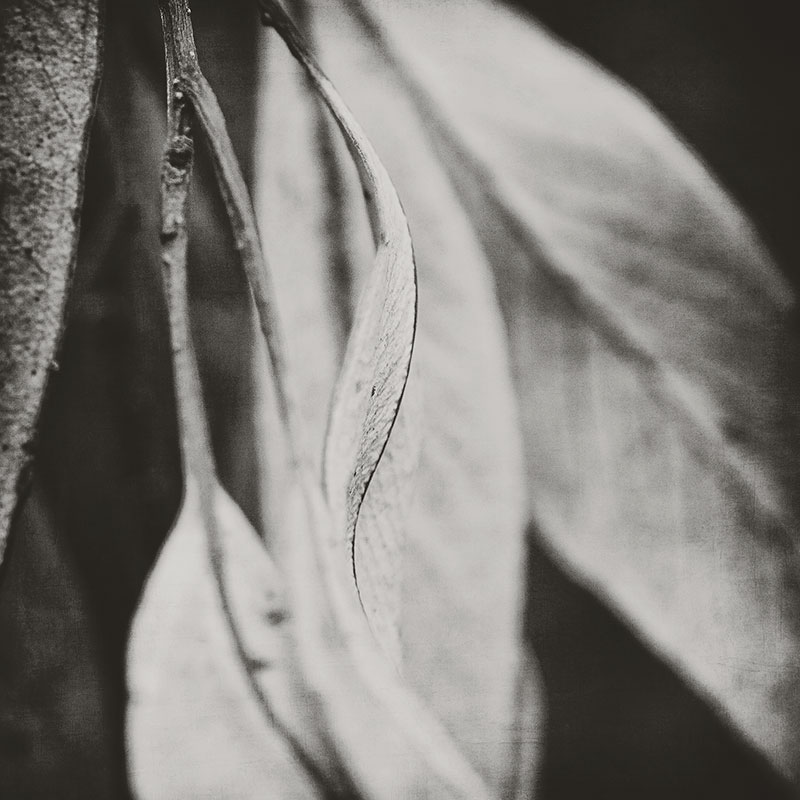 leaf-edge-in-black-and-white
