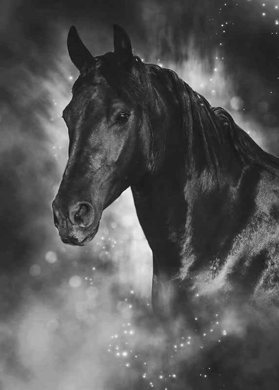 magical-portrait-of-horse