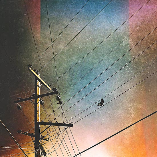 magpie-taking-off-from-telegraph-wires-using-a-textured-background-