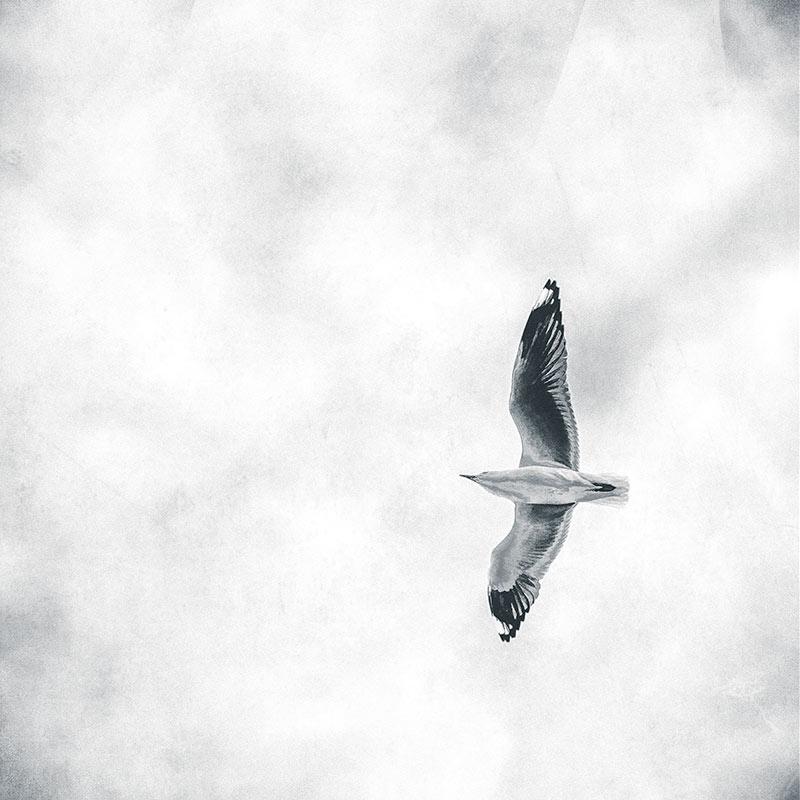 seagull-flying-overhead