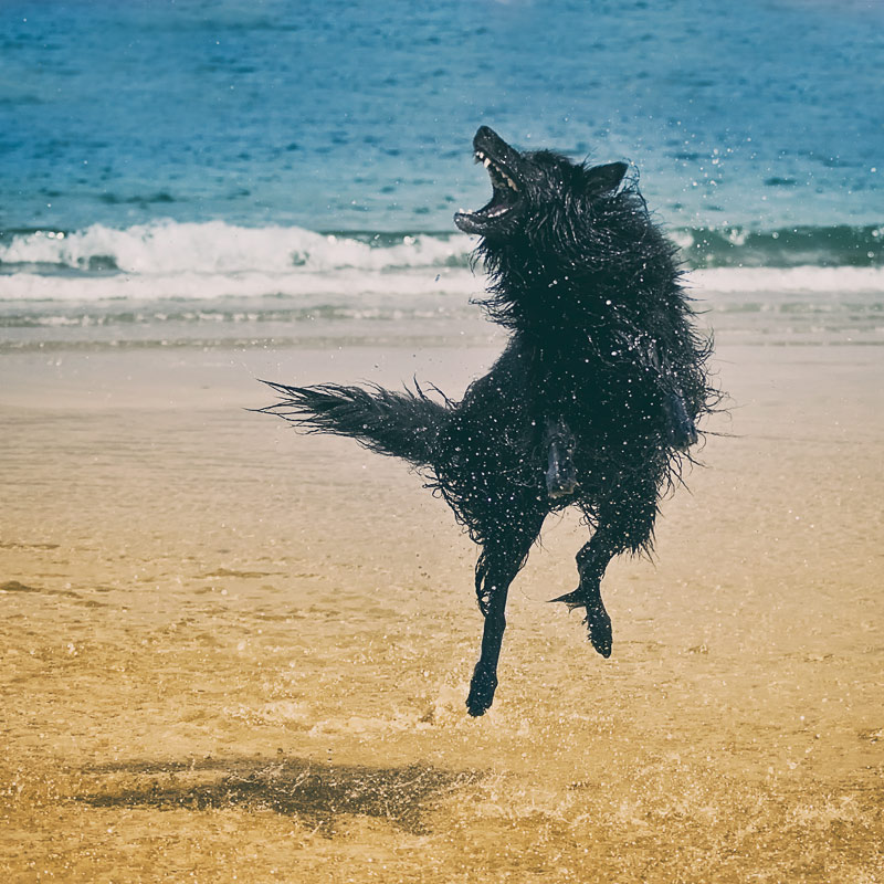 WolfCub jumping at the beach