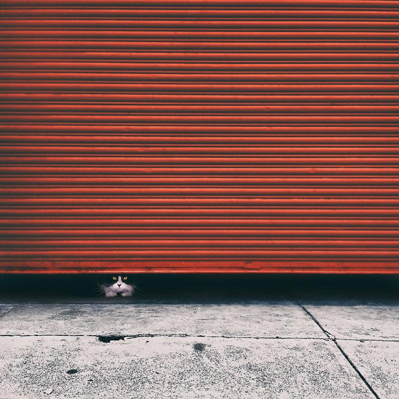 Cat peeking out from red garage door