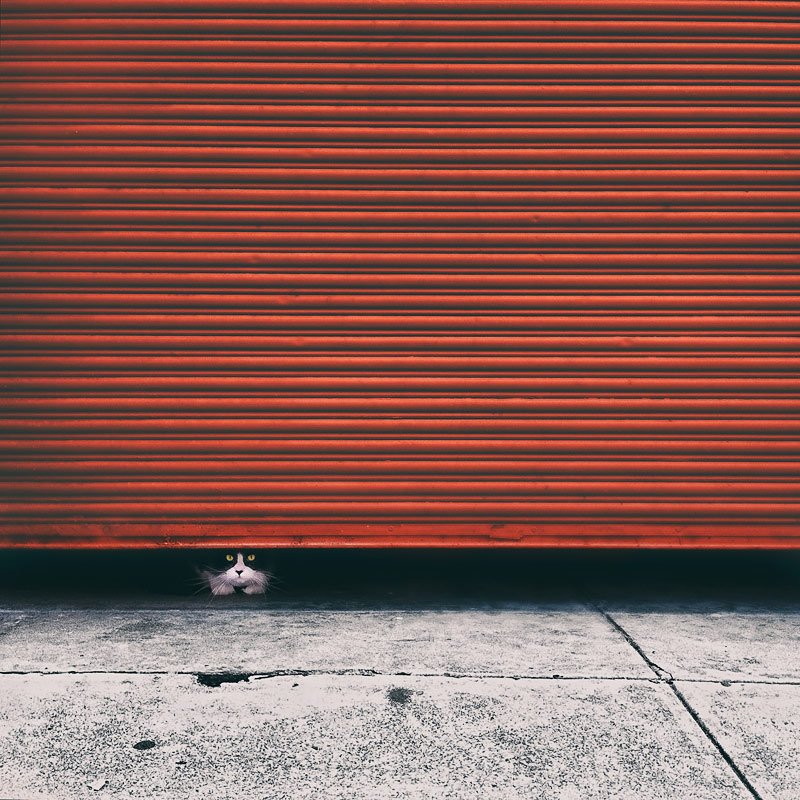Tuxedo-cat-peeking-out-from-red-roller-door