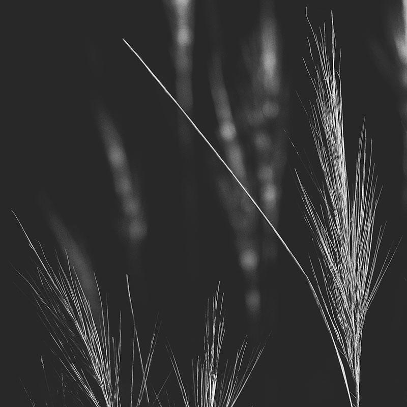 Native-grass