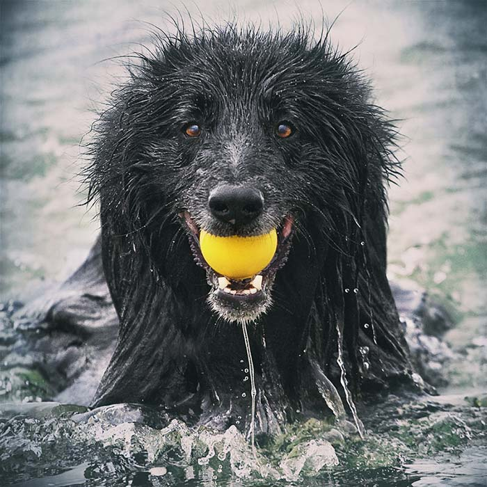 Dog-in-water-with-ball-Edit