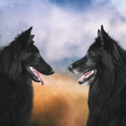 Phoenix-and-WolfCub