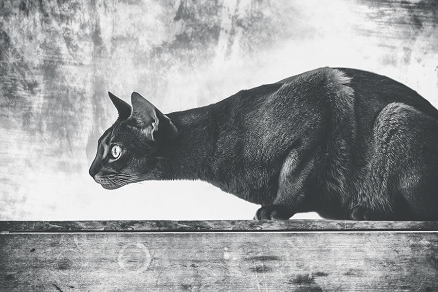 Crouching-cat