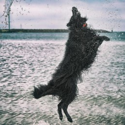 Dog-leaping-in-air