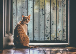 Ginger-cat-looking-back-from-doorway