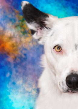 Half-face-portrait-of-a-dog
