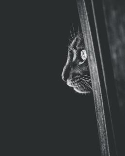 Peeking-cat