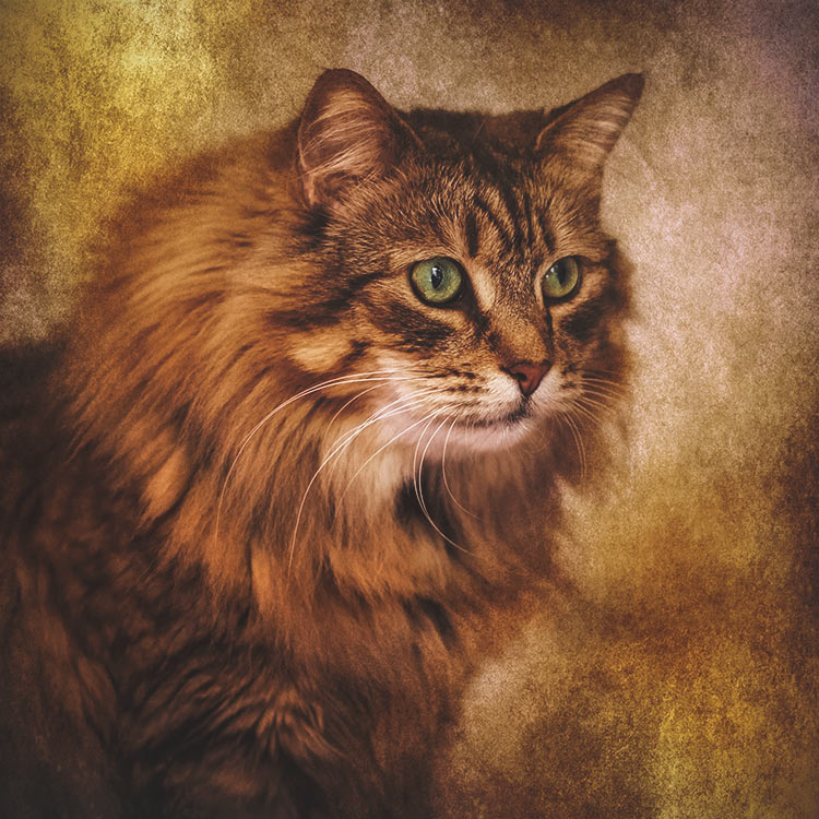 Portrait-of-a-golden-cat