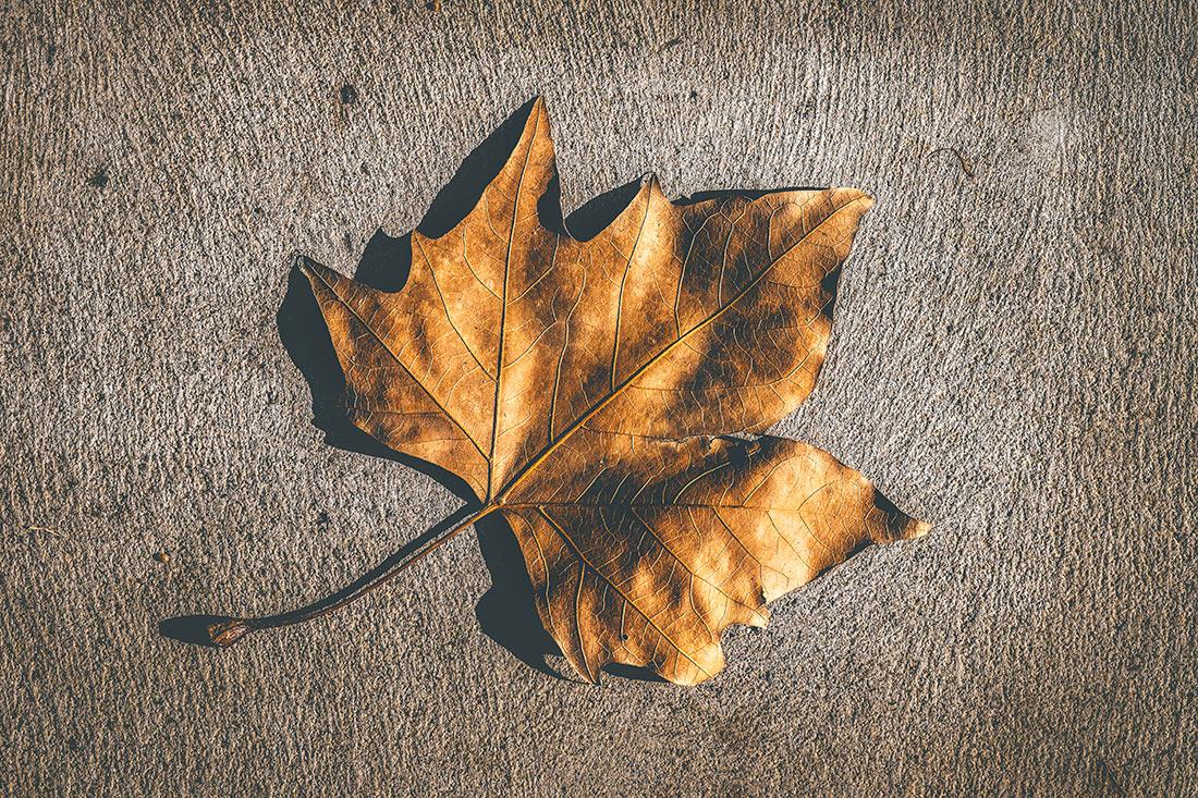autumn-leaf-on-concrete