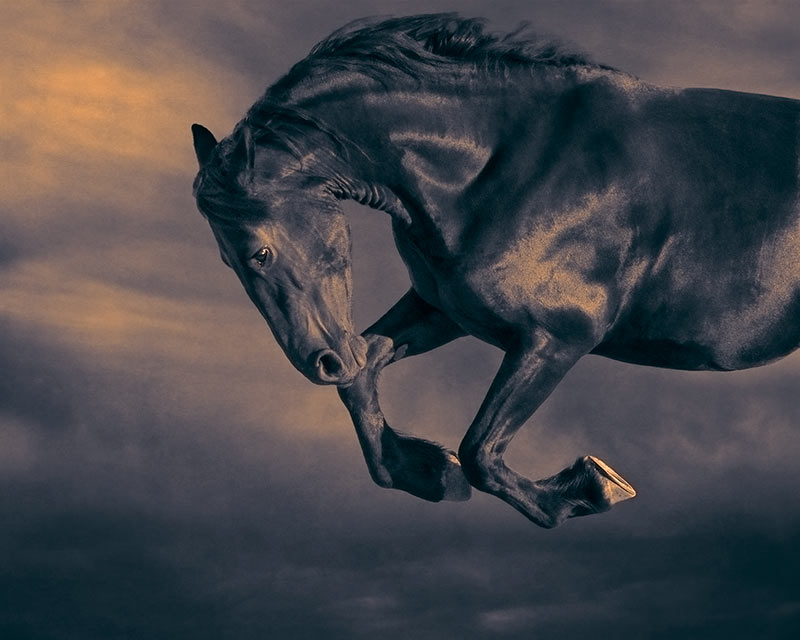 bucking-horse-against-the-sky