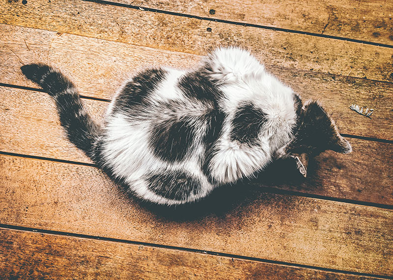 unusual cat fur markings
