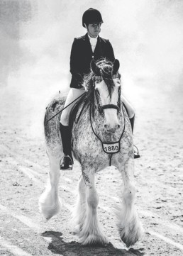 clydesdale-horse-and-rider