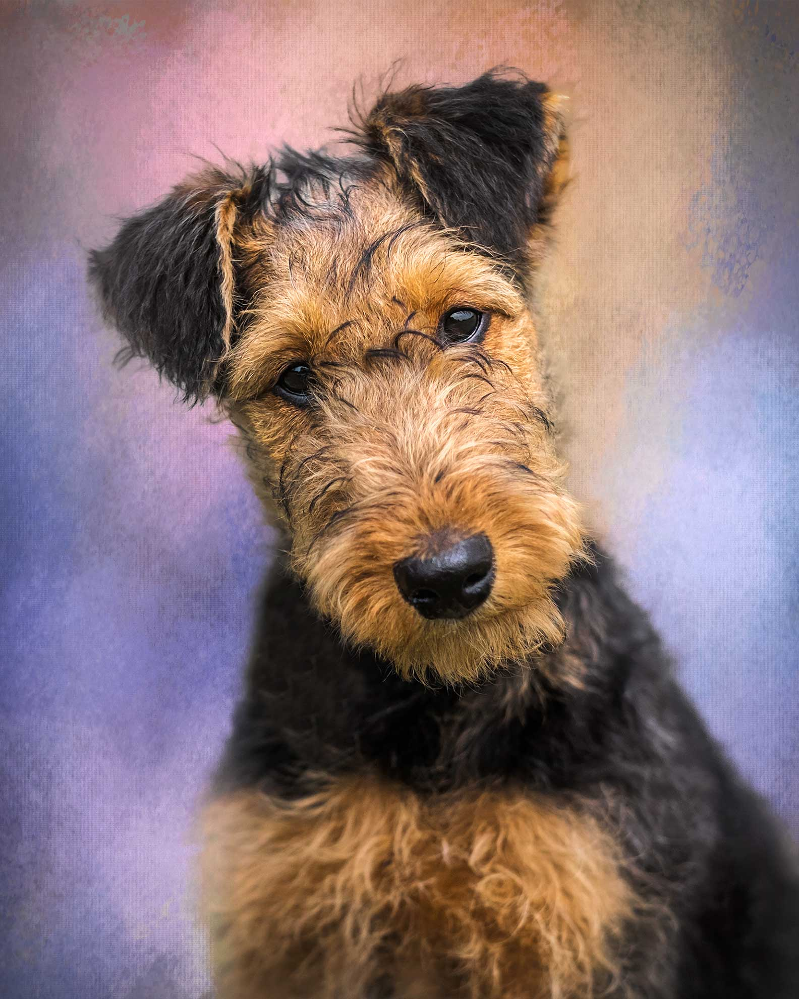 portrait of an airedale terrier puppy