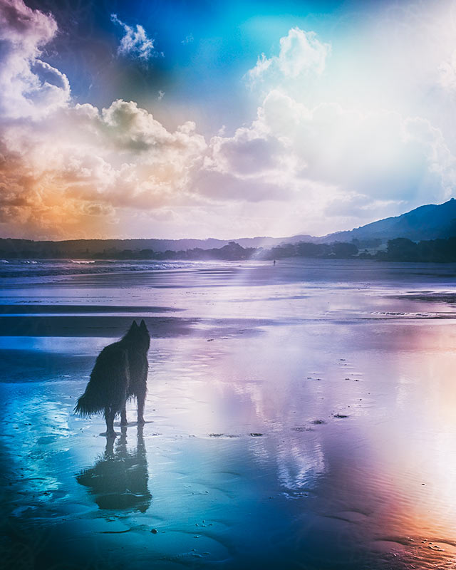 dog-on-beach-with-colorful-light