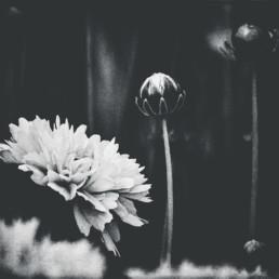 flower-with-bulbs